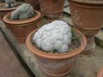 web cactus spugna