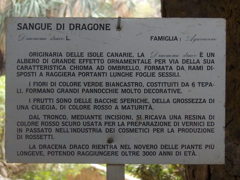 web sangue di dragone